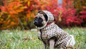 Los mejores abrigos para perros